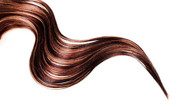 healthy hair human brown hair on white isolated background highlights hair stock pictures, royalty-free photos & images