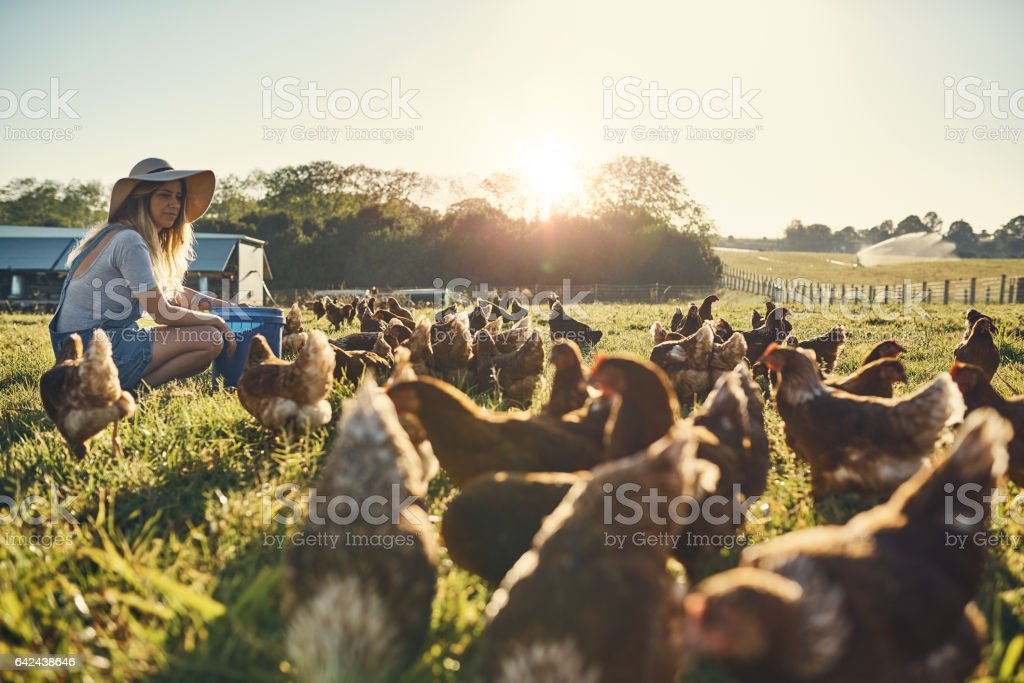 Healthy hens are happy hens stock photo