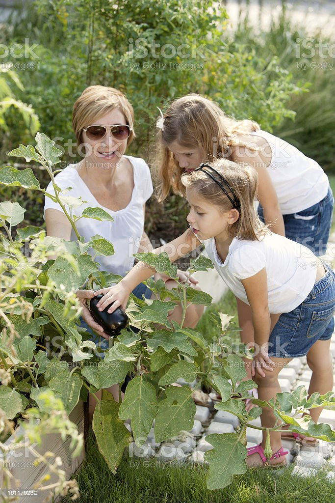 Healthy Lifestyle: Caucasian Mother Daughters Little Girls Picking Homegrown Vegetables royalty-free stock photo