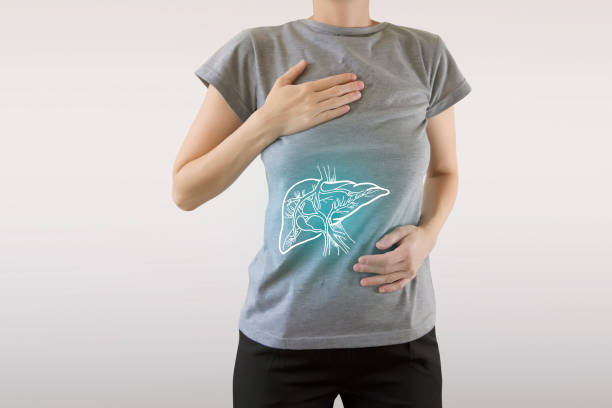 zdrowa wątroba podświetlona na niebiesko - anatomia zdrowego człowieka - detoks zdjęcia i obrazy z banku zdjęć