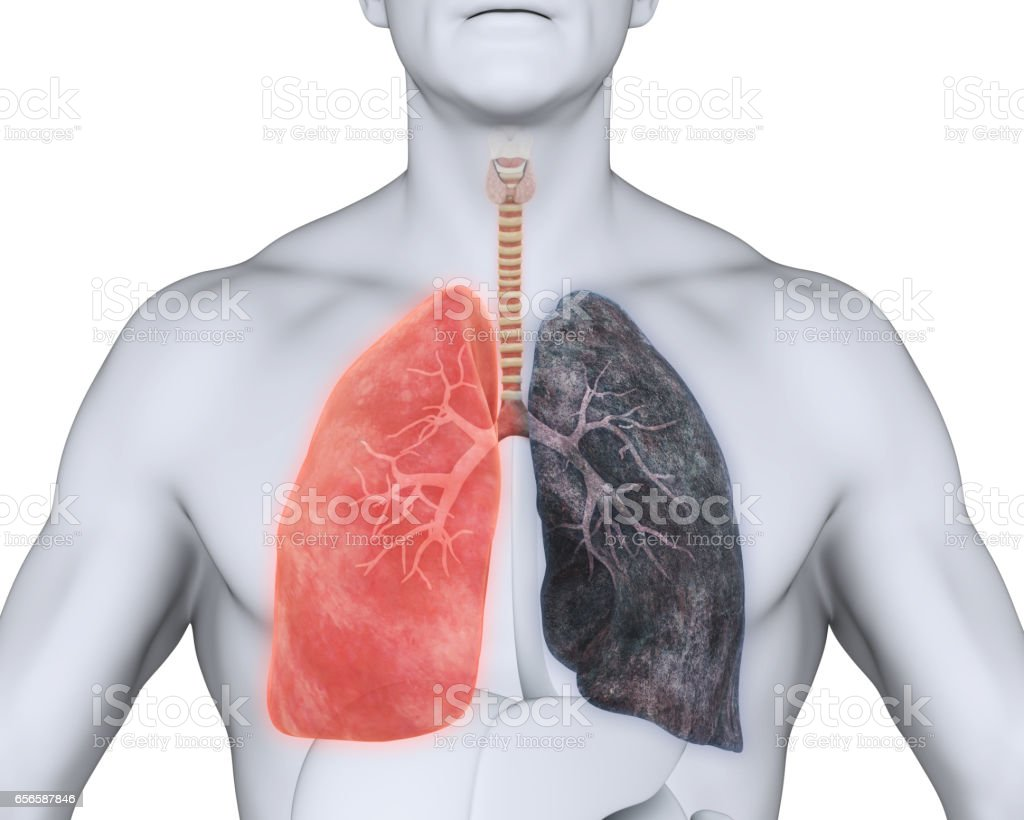 healthy lung and smokers lung stock photo more pictures of
