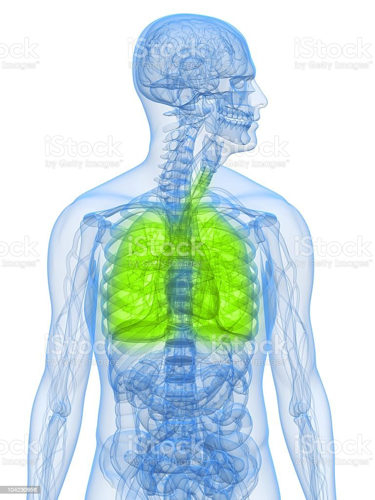 healthy lung royalty-free stock photo