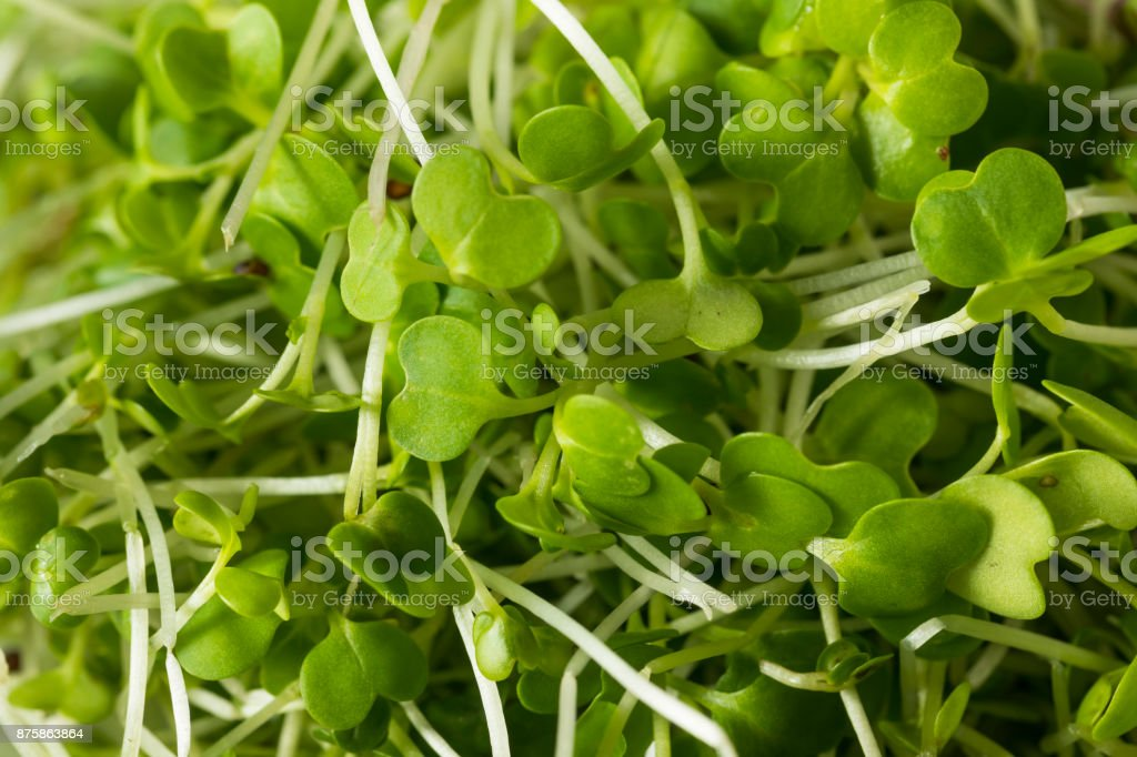 Healthy Raw Organic Microgreens stock photo