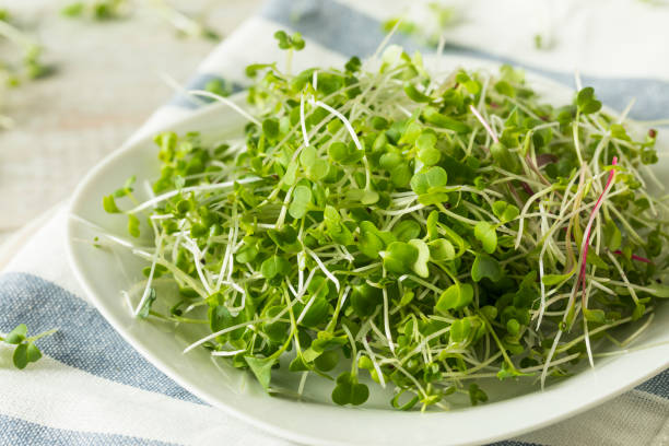 Healthy Raw Organic Microgreens Healthy Raw Organic Microgreens Ready to Use bean sprout stock pictures, royalty-free photos & images