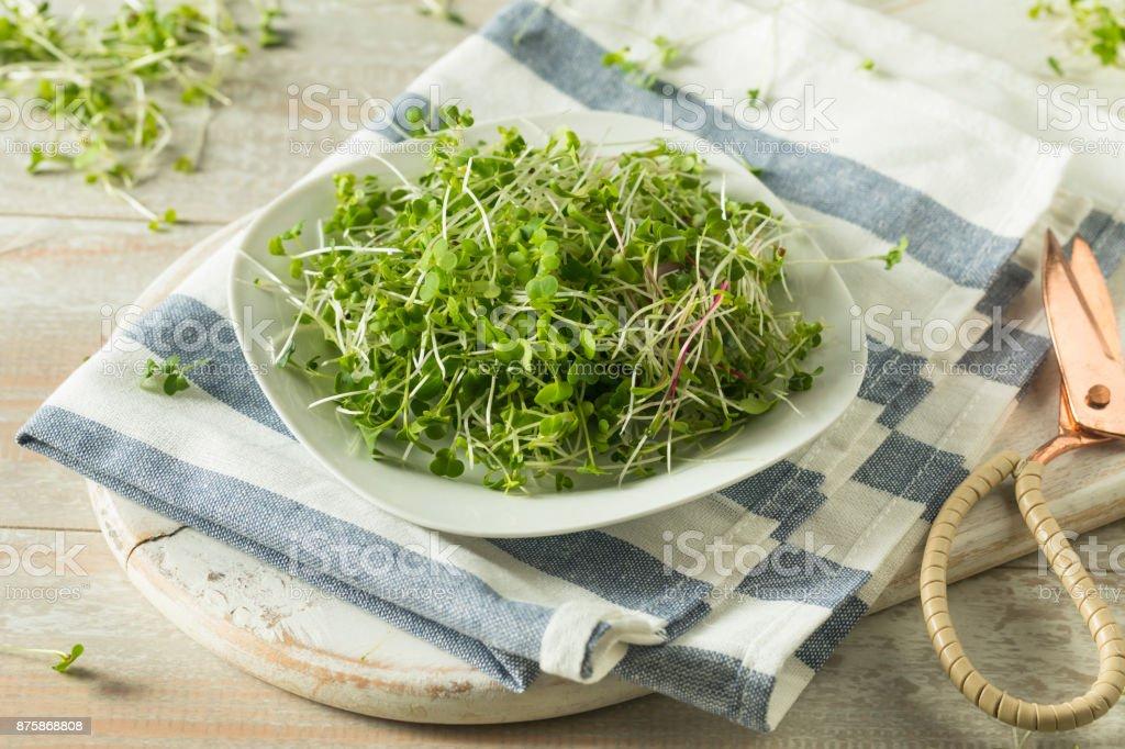 Healthy Raw Organic Microgreens stock photo