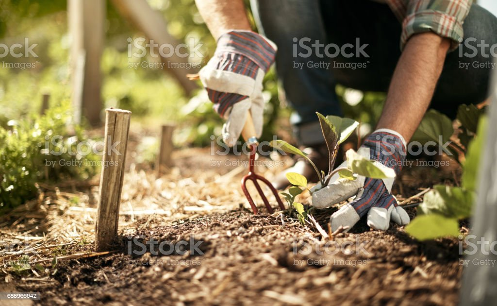 Healthy soil is the key to feeding the world stock photo