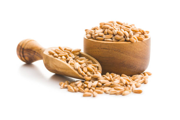 Healthy spelt grains. Healthy spelt grains in wooden scoop and bowl isolated on white background. spelt stock pictures, royalty-free photos & images