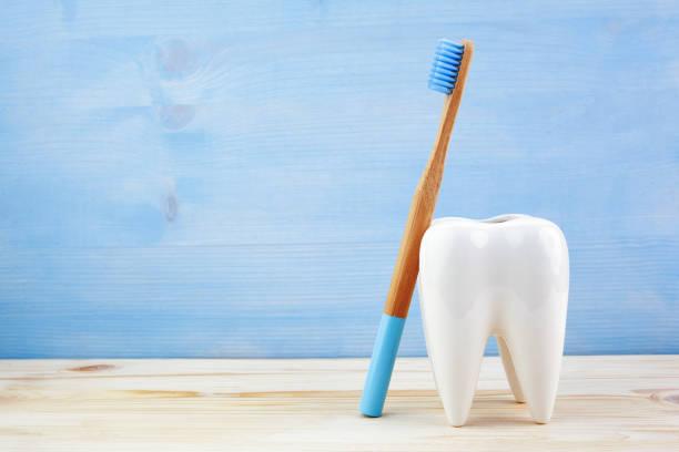 Gesundes Zahnkonzept, Zahnmodell mit Zahnbürste auf blauem Holzhintergrund. – Foto