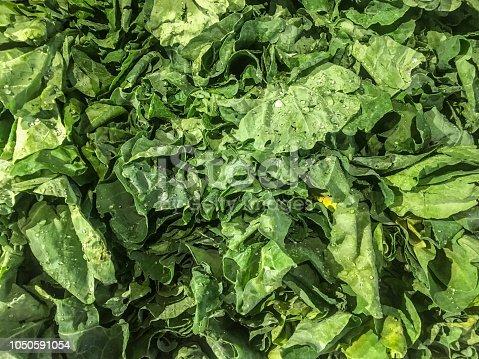istock Healthy Vegetables 1050591054