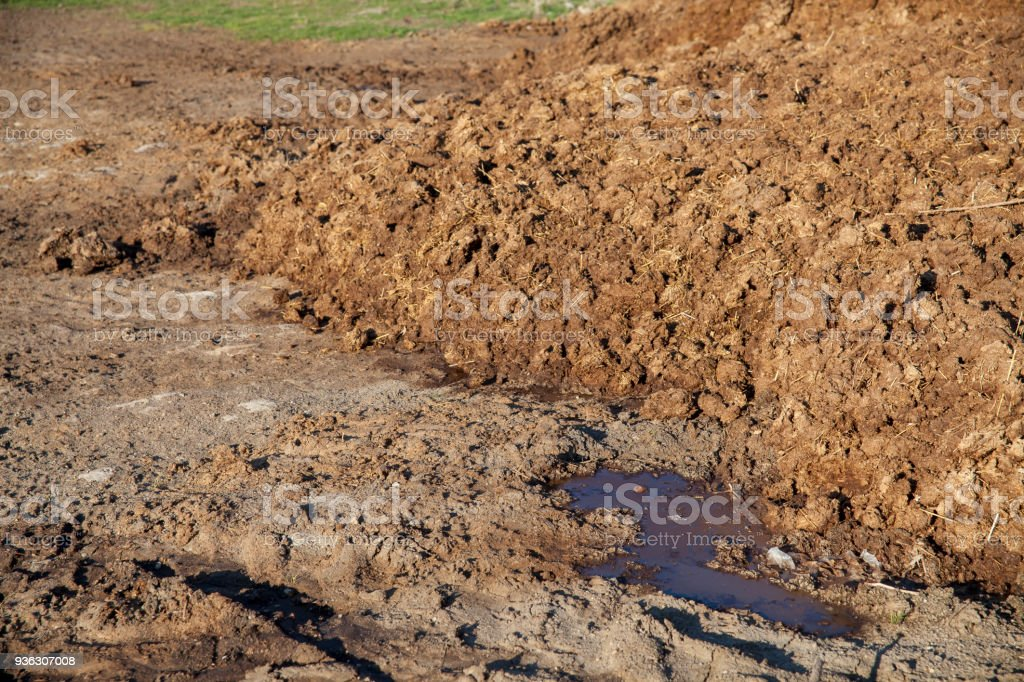 Heap of animal manure on a field. stock photo