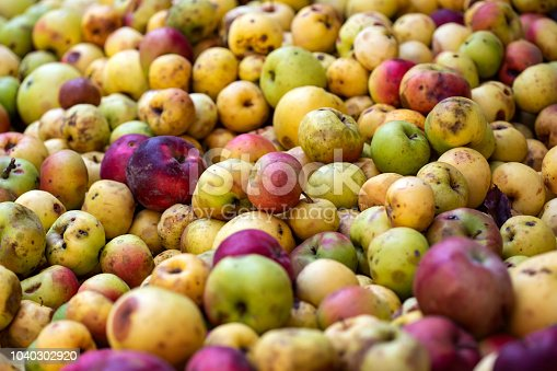 Heap of apples ready to be transformed into the alcohol