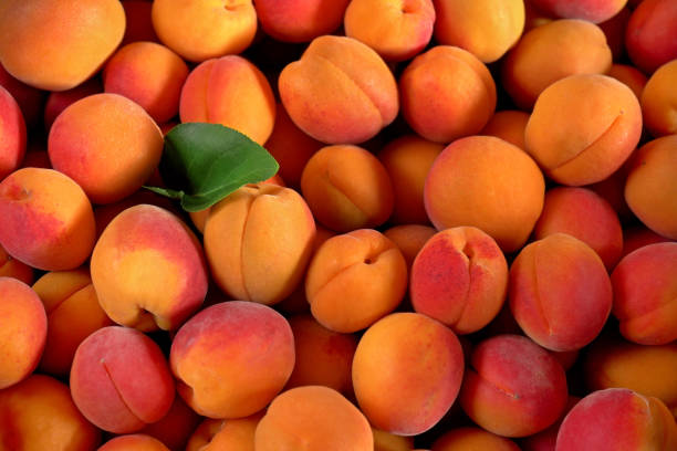 Heap of apricots with one green leaf, view from above stock photo