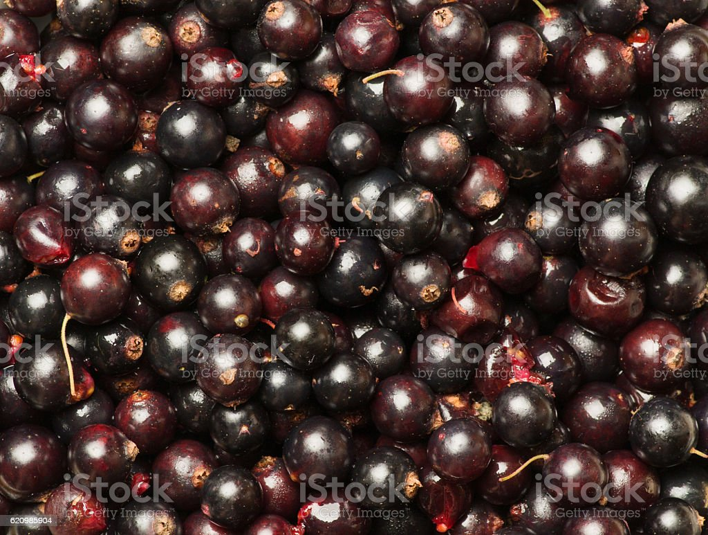 Heap of black currant. Textured background .top view foto royalty-free