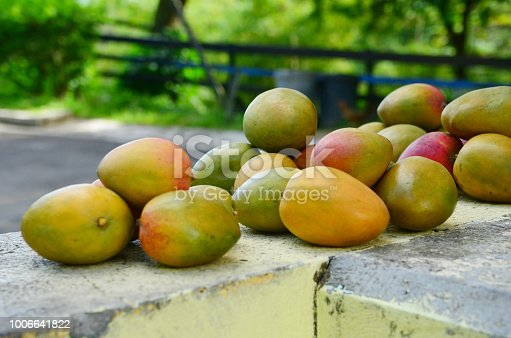 heaps of delicious healthy julie mangoes piled for sale outdoors