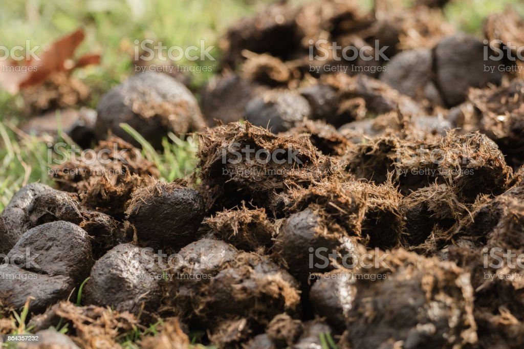 A heap of donkey dung on the meadow stock photo