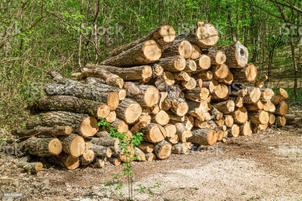 Heap of firewood in a forest royalty-free stock photo