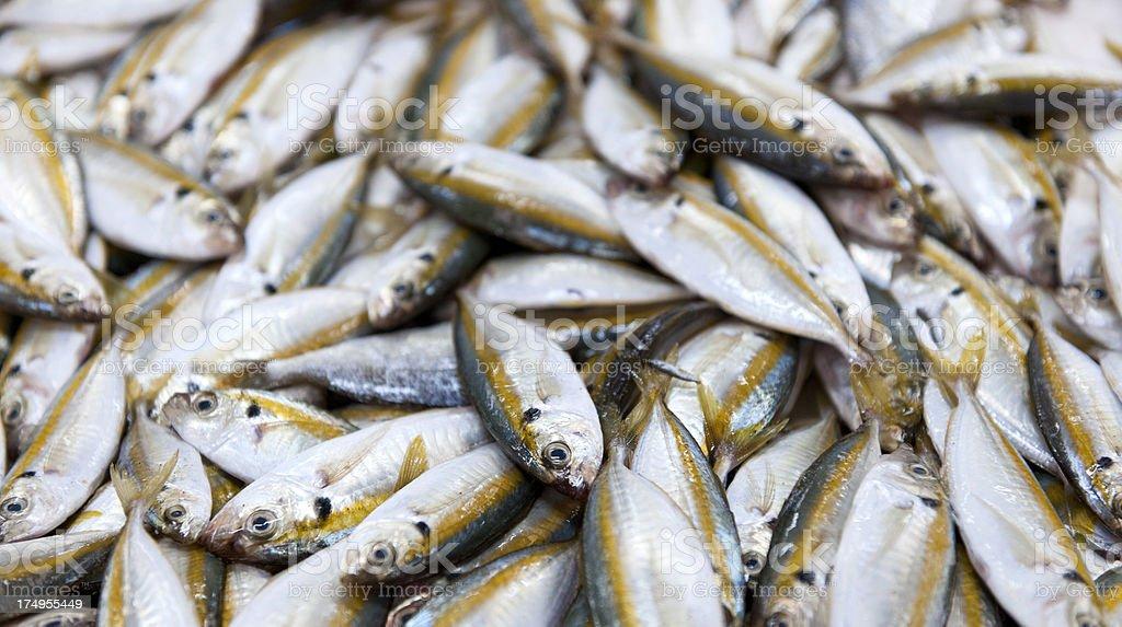 heap of fish at Deira market in Dubai stock photo