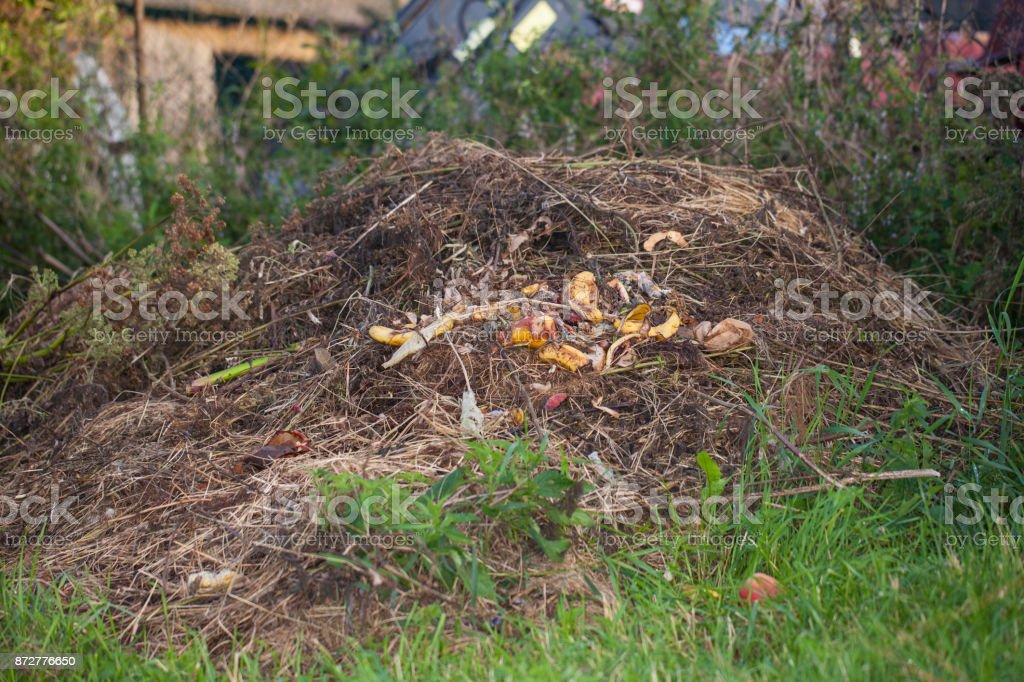 heap of food waste stock photo