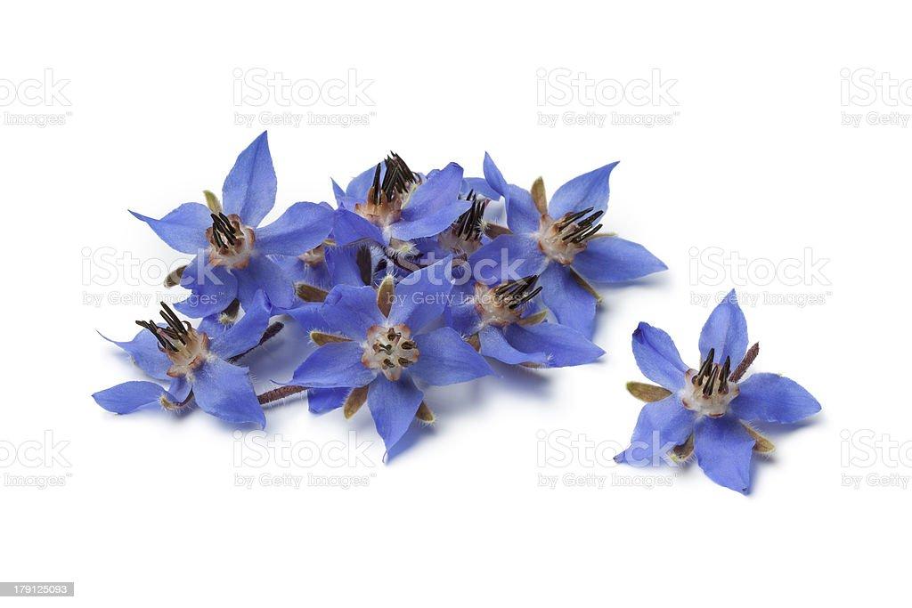 Mucchio di fiori freschi Borragine - foto stock