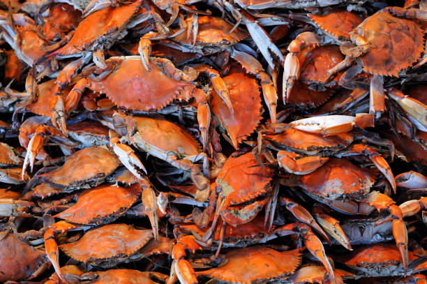 Heap of freshly Steamed Blue Crabs ready to eat stock photo
