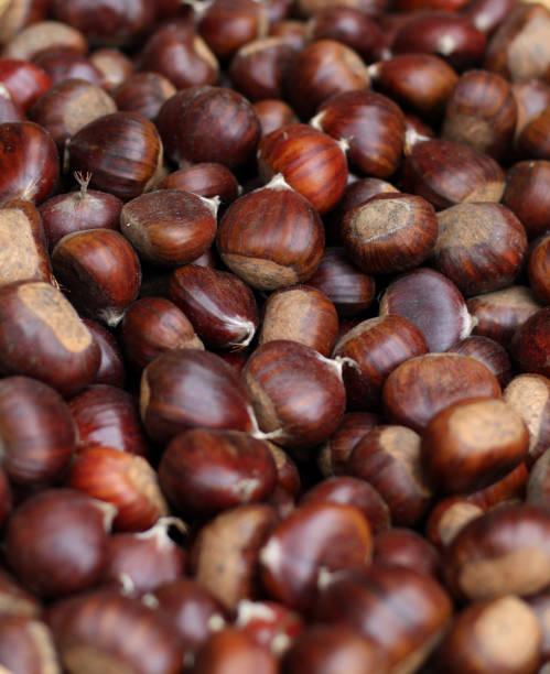 Haufen von Früchten von Castanea Sativa gesammelt in den Wald im Herbst – Foto