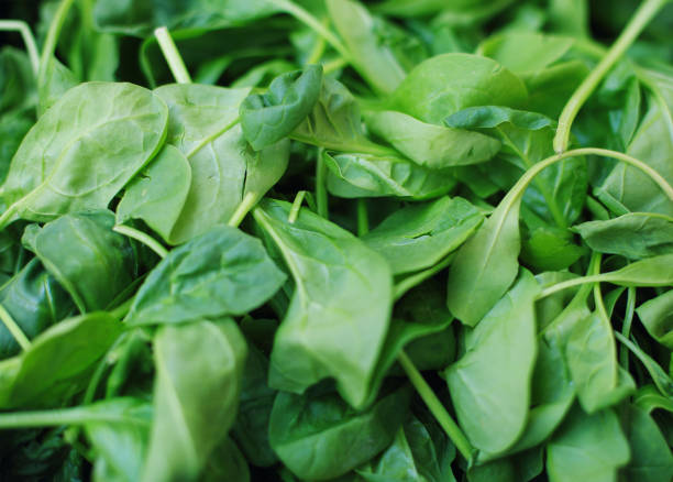 Heap of green spinach leaves stock photo