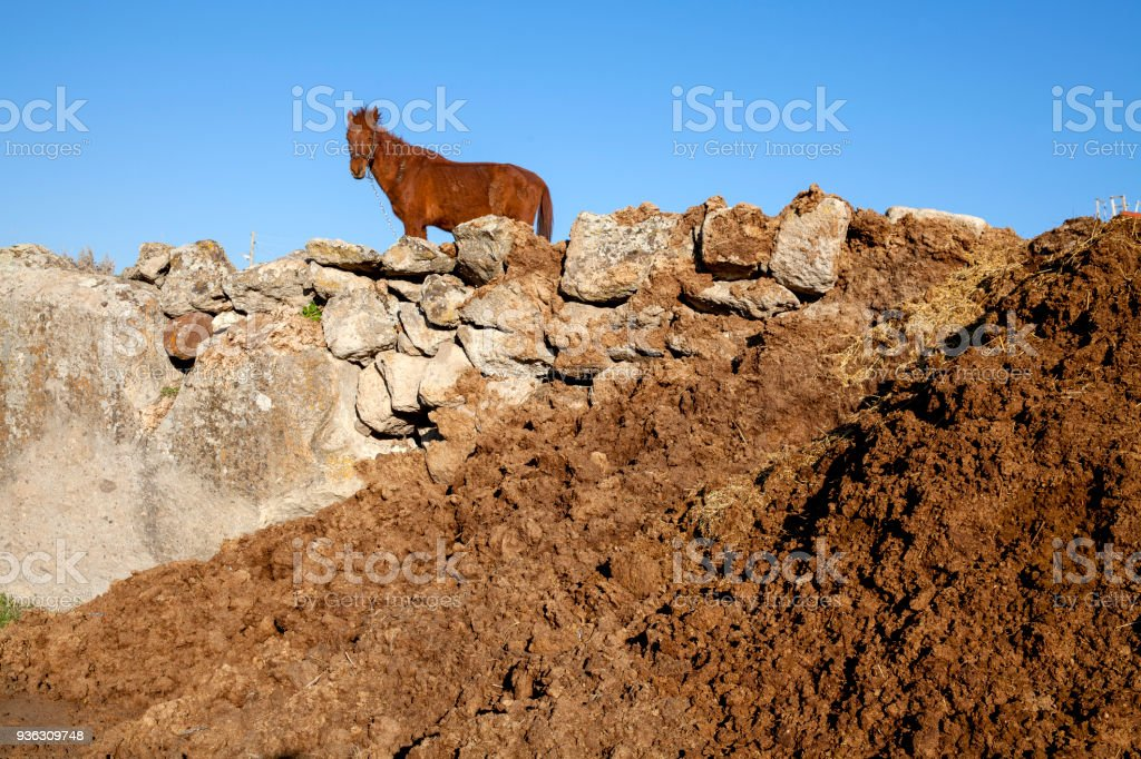 Heap of horse manure on a field. stock photo