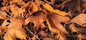 A bed of dry and orange leaves lying on the ground in the fall