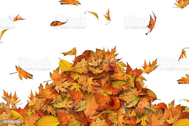 Photo of Heap of leaves