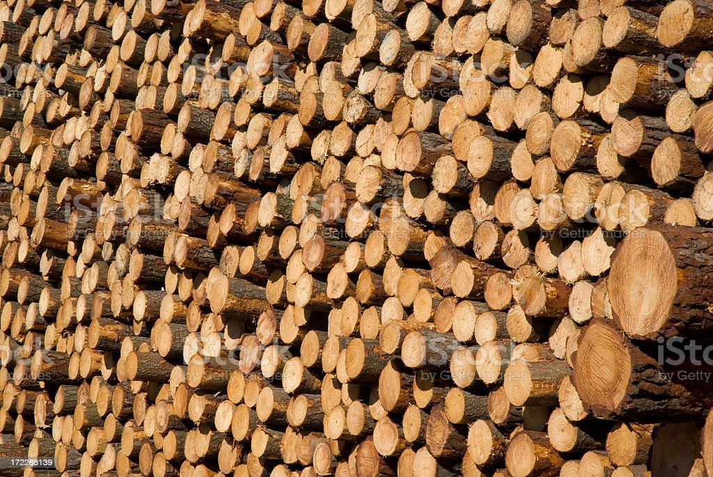 Heap of Pine Forest stock photo