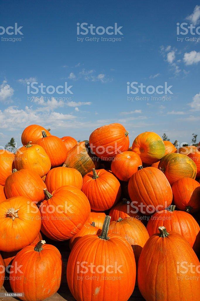 heap of pumpkins against blue sky stock photo