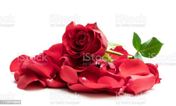 Heap of red rose petals isolated on white picture id1125445846?b=1&k=6&m=1125445846&s=612x612&h=7ye7cf2nfxaz godkecarxa hpea8s4i9 ywaoadq44=