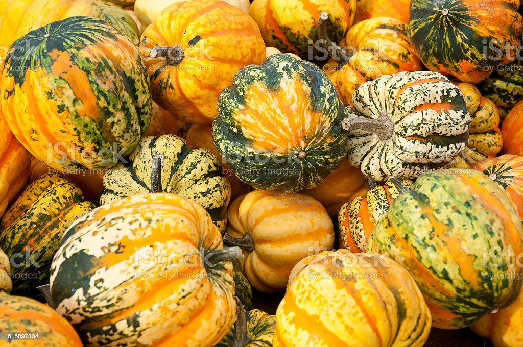 Heap of ripe mixed Pumpkins – Foto