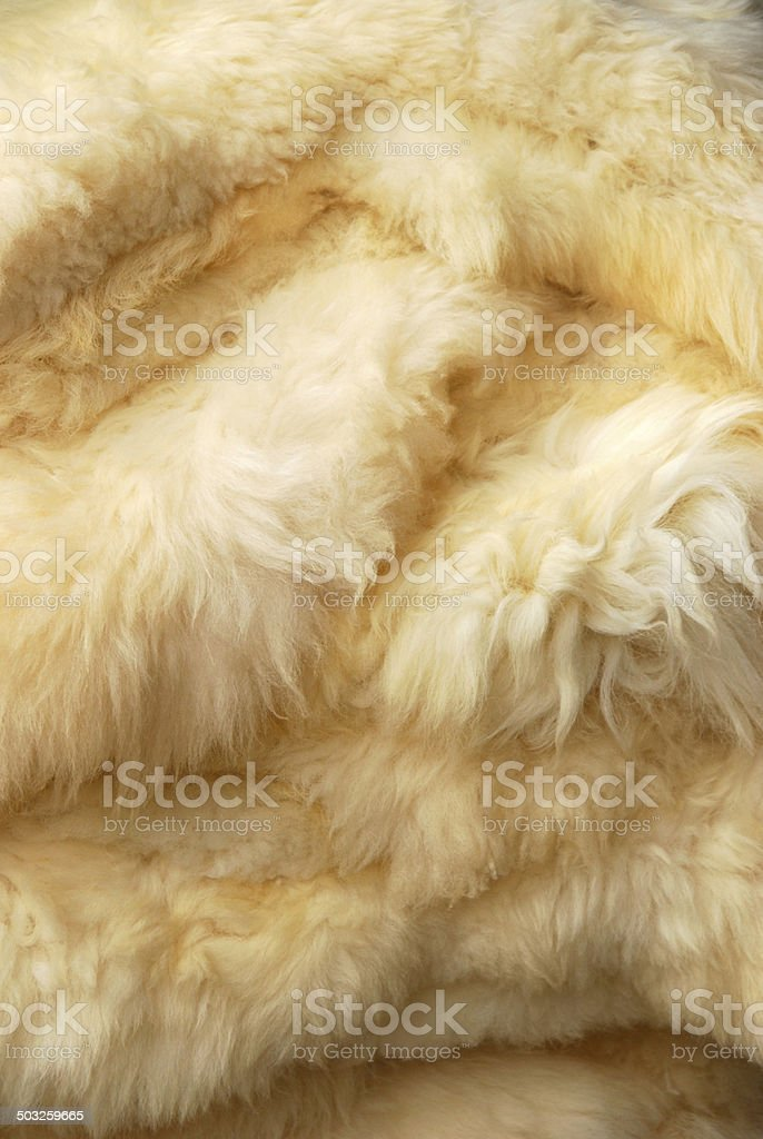 Heap of Sheepskin fur or background texture stock photo