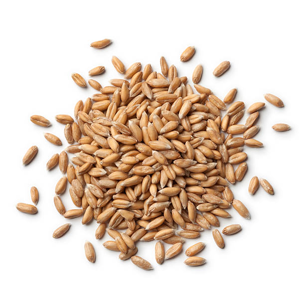 Heap of  Spelt wheat Heap of raw Spelt wheat  on white background spelt stock pictures, royalty-free photos & images