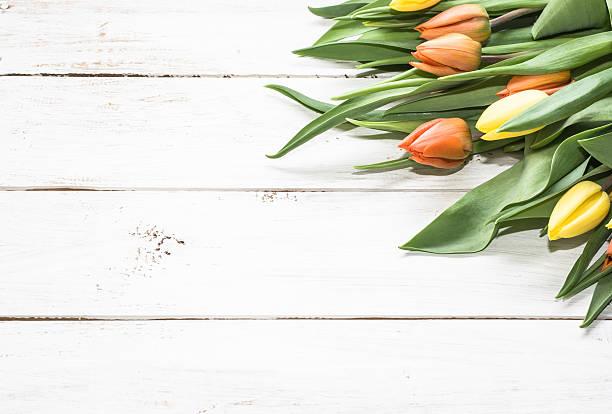 heap of tulips arranged on white wooden planks background - meerdere lagen effect stockfoto's en -beelden