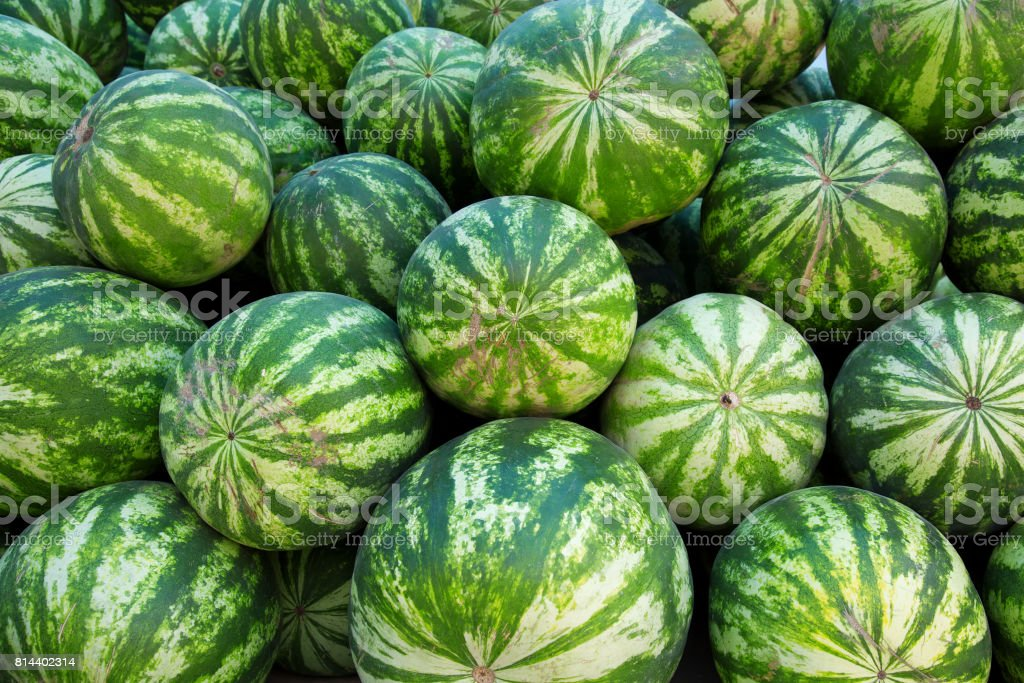 Heap of watermelons. stock photo
