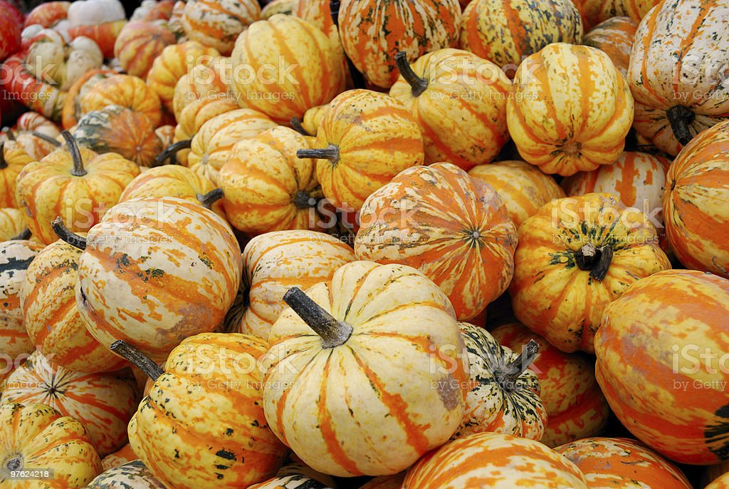 Heap of yellow striped pumpkins royalty-free stock photo