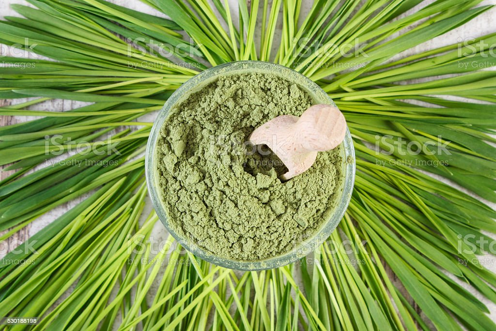 Heap of young powder barley in dish and barley grass stock photo