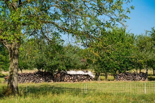 heap trädstam i grönt landskap av hunspach, frankrike - hunspach bildbanksfoton och bilder