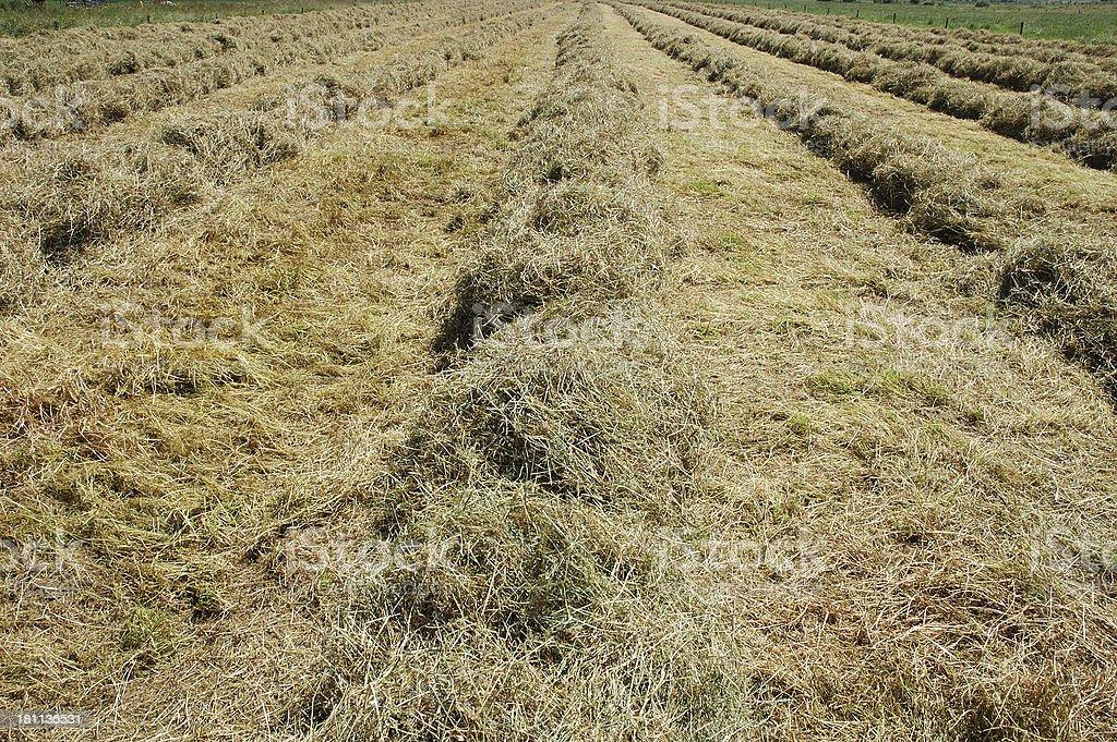 Heapes of hay royalty-free stock photo