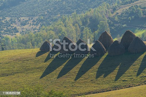 Line of stack of dry hay on meadow against green forest