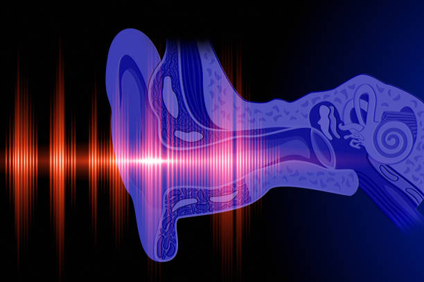 hear the sound wave - ear stock photos and pictures