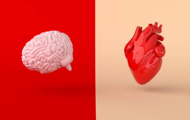Heart and brain 3d rendering. Emotions and rational thinking conflict concept. Soul and intelligence balance Heart and brain 3d rendering. Emotions and rational thinking conflict concept. Soul and intelligence balance human heart stock pictures, royalty-free photos & images