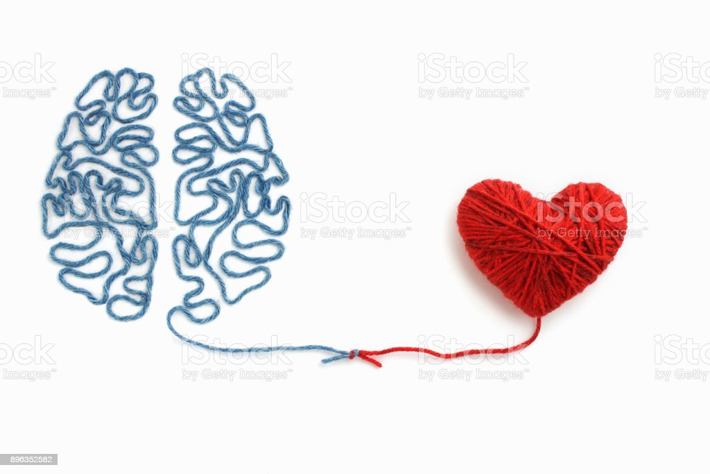 Heart and brain connected by a knot on a white background stock photo