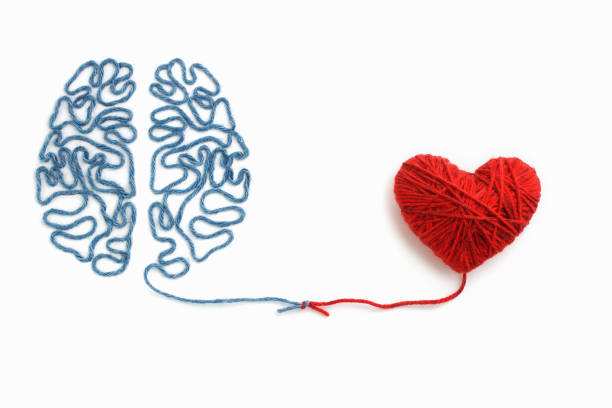 heart and brain connected by a knot on a white background - heart shape stock photos and pictures