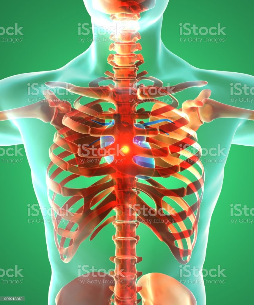 Heart And Ribcage Surgical Operation Human Body Blood Flow Man Stock