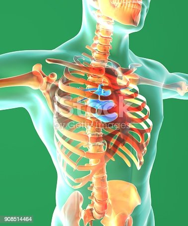 Heart And Ribcage Surgical Operation Human Body Circulatory System