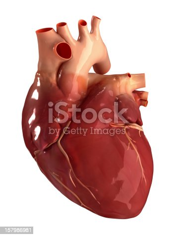 istock Heart anterior view isolated 157986981