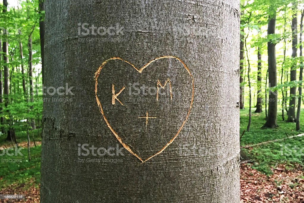 Heart carved in Tree stock photo